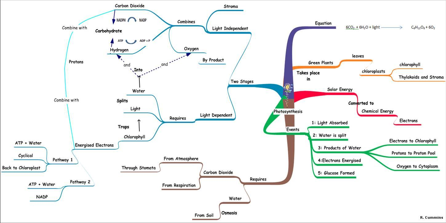 concept map of photosynthesis
