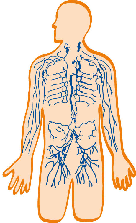 Unique Lymph System Diagram Pattern - Anatomy And Physiology Biology ...