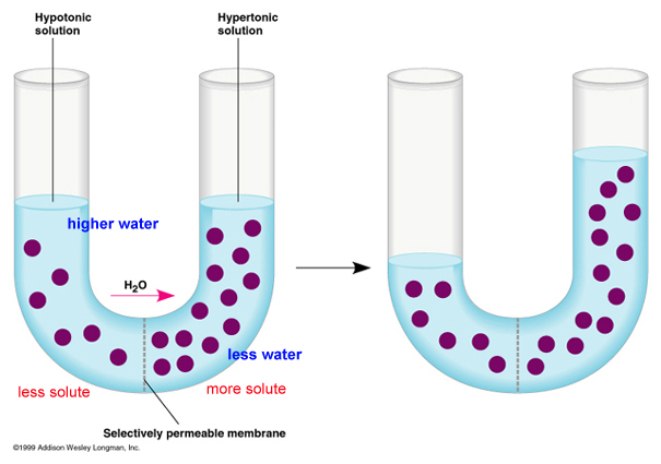 http://www.mrcbiology.com/13-osmosis-and-diffusion